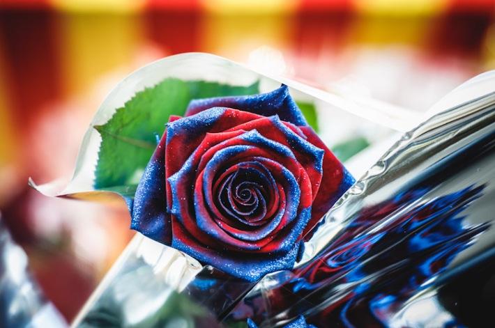 rosa blaugrana